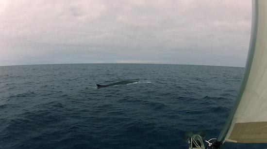 w-baleine-19
