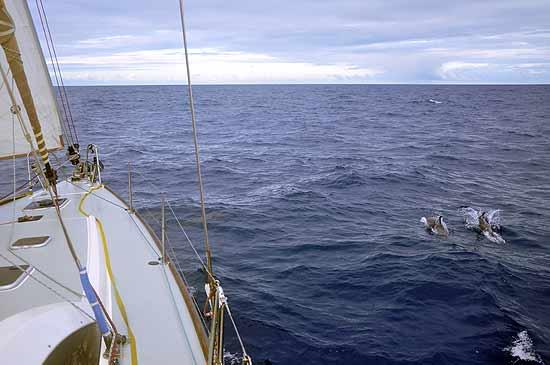 w-cbird-dauphins