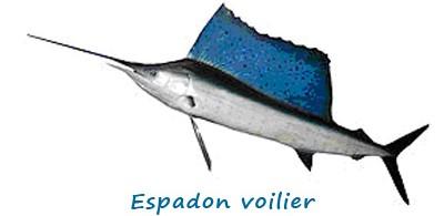 w-espadon-voilier